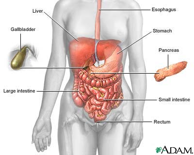 where is the gallbladder located in the body